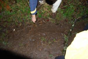 Aula sobre pegadas de animais