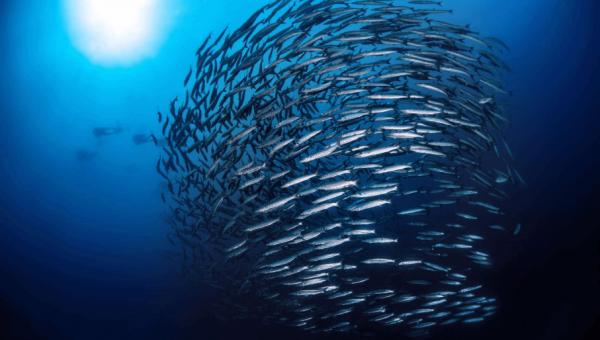 PUCRS integra projeto multinacional sobre a indústria pesqueira