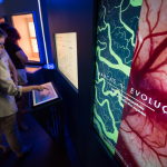 PUCRS' Science and Technology Museum launches exhibit Marcas da Evolução (Traits of Evolution)